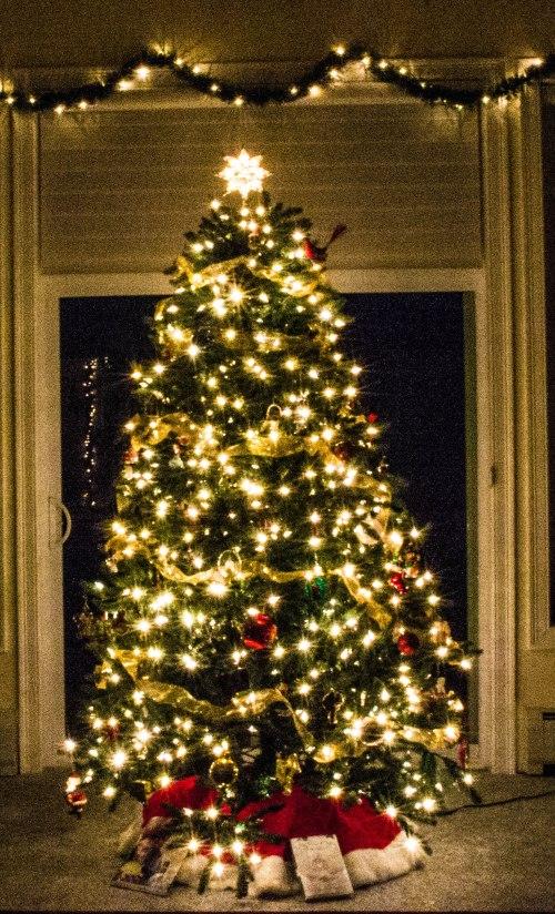 Christmas Tree-0035-1