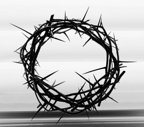 Crown Of Thorns-0004