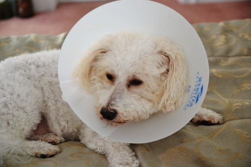 buddy in cone 002